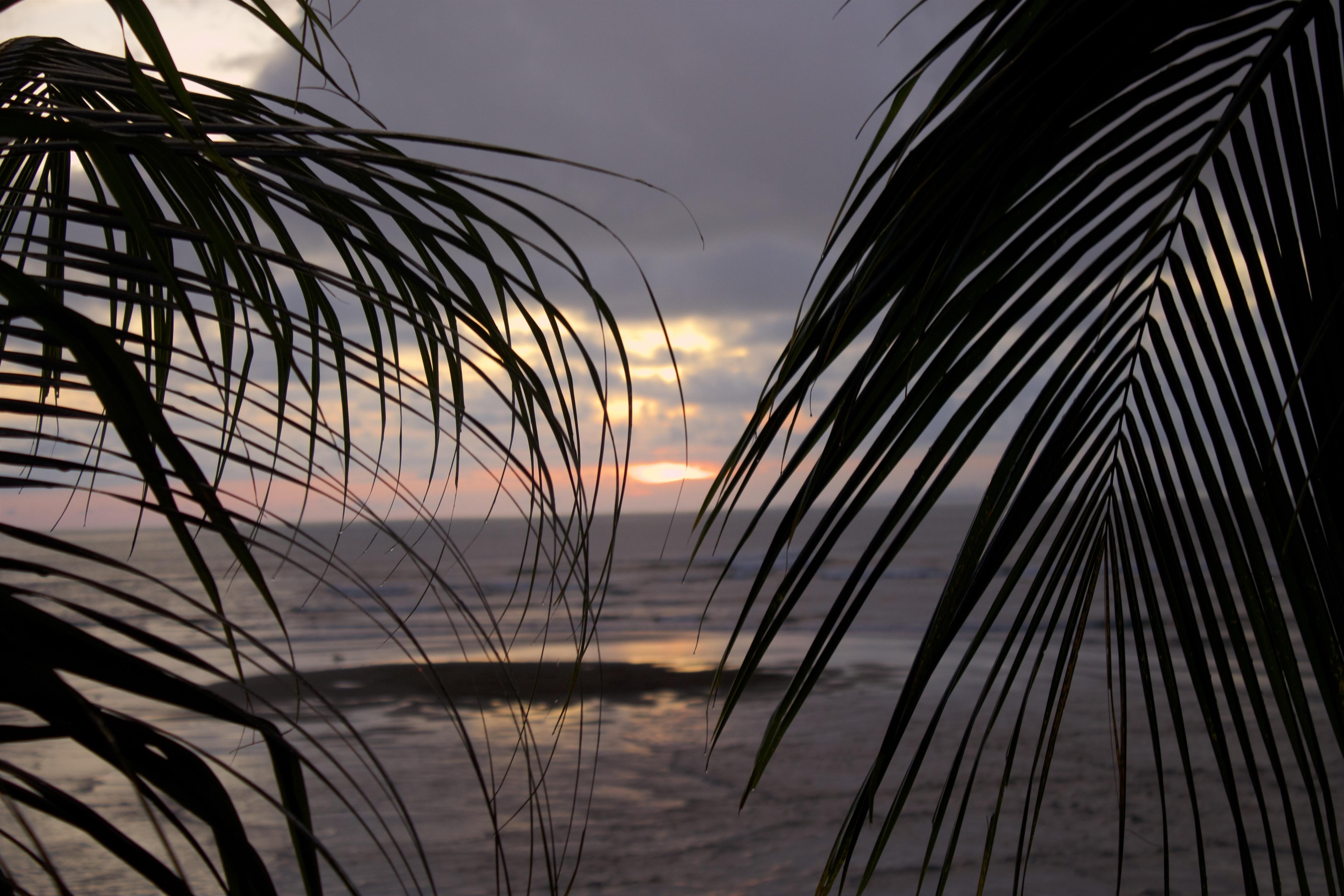 Palmen und Meer im Sonnenuntergang