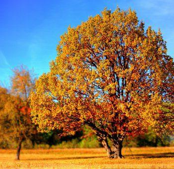 Bäume mit Herbstlaub