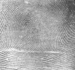 Rillen eines Fingerabdrucks