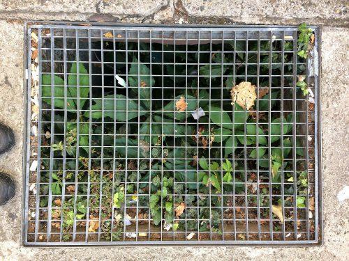Pflanzen hinter einem Gitterfenster