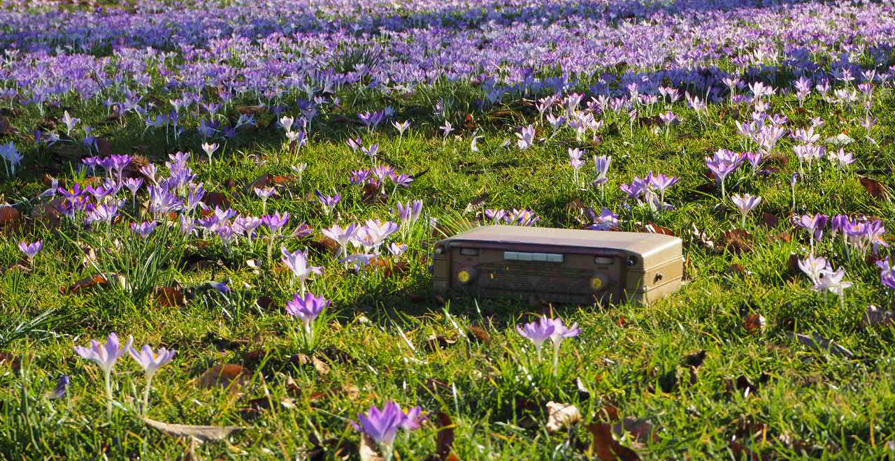 Radiogerät auf einer Wiese mit Frühlingsblumen