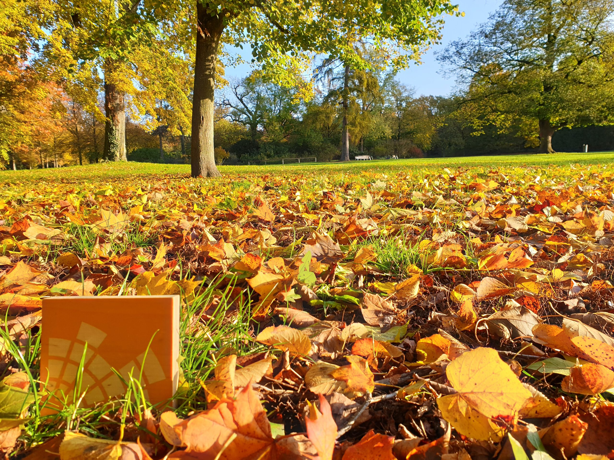 Holzklötzchen mit Campusradio-Logo im Herbstlaub